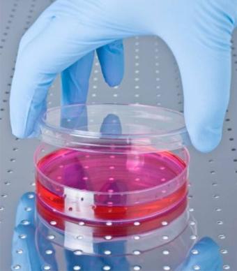 قفزة علمية هائلة أبحاث الخلايا 11141_large.jpg